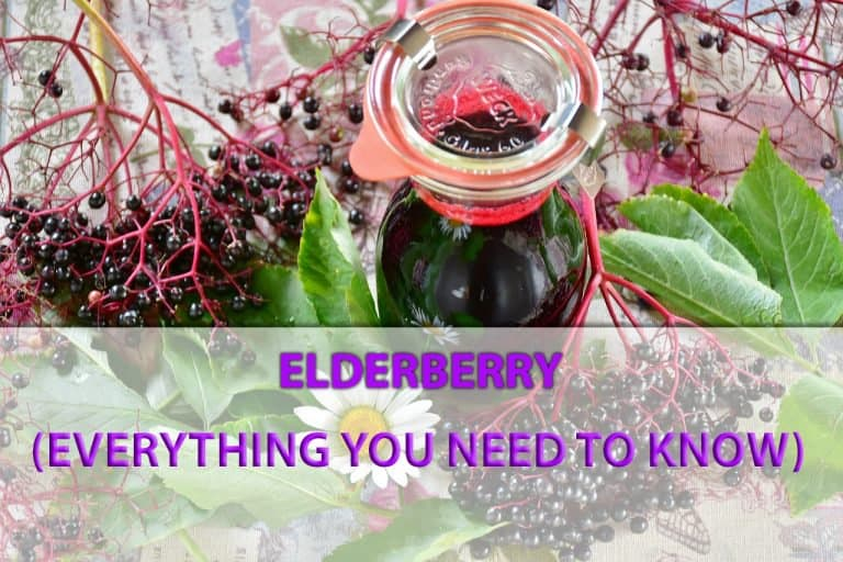 Elderberry: The Benefits and Side Effects, Uses and Products